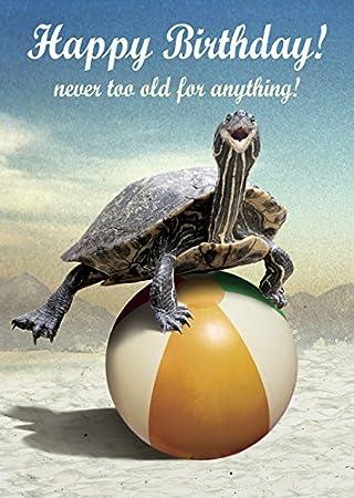 Birthday Turtle Greeting Card By Max Hernn Amazon Office
