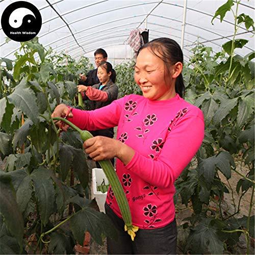 (Melone Slicee Plant Mini Buy Loofah Vegetable Semente 60pcs Plant Luffa Cylindrica Melon Loofah)