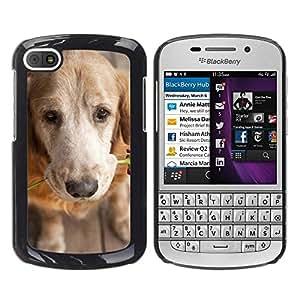 Be Good Phone Accessory // Dura Cáscara cubierta Protectora Caso Carcasa Funda de Protección para BlackBerry Q10 // Golden Retriever Love Rose