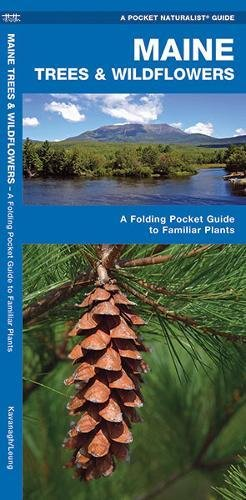 Maine Trees & Wildflowers: A Folding Pocket Guide to Familiar Species (A Pocket Naturalist - Ri Star Pocket