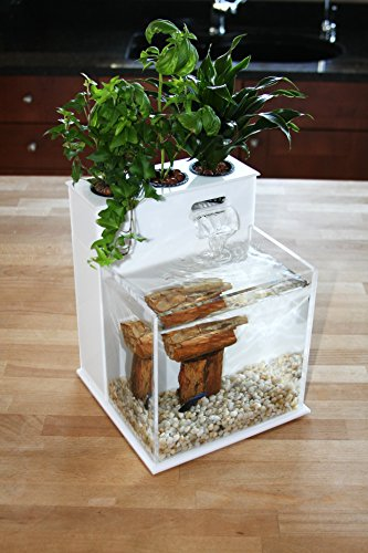 51lnICZp3hL - Fin to Flower Aquaponic Aquarium Mini System A
