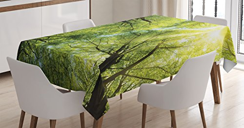 Ambesonne Farm House Decor Tablecloth, The Warm Spring Sun Shining Through the Canopy of Tall Beech Trees Romantic Scene, Rectangular Table Cover for Dining Room Kitchen, 52x70 Inches, Green Yellow