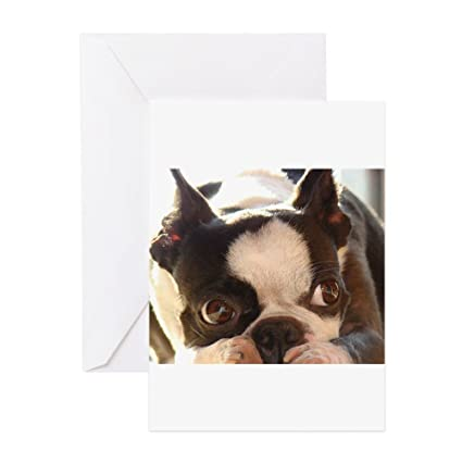 Amazon Cafepress Boston Terrier Greeting Cards Greeting