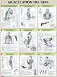 Musculation des bras : Poster