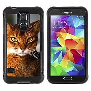 Suave TPU Caso Carcasa de Caucho Funda para Samsung Galaxy S5 SM-G900 / Abyssinian Chausie Orange Cat Breed / STRONG
