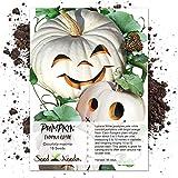 Package of 15 Seeds, Lumina White Pumpkin (Cucurbita maxima) Non-GMO Seeds by Seed Needs