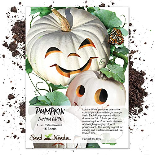 White Pumpkin Seeds - Package of 15 Seeds, Lumina White Pumpkin (Cucurbita maxima) Non-GMO Seeds by Seed Needs