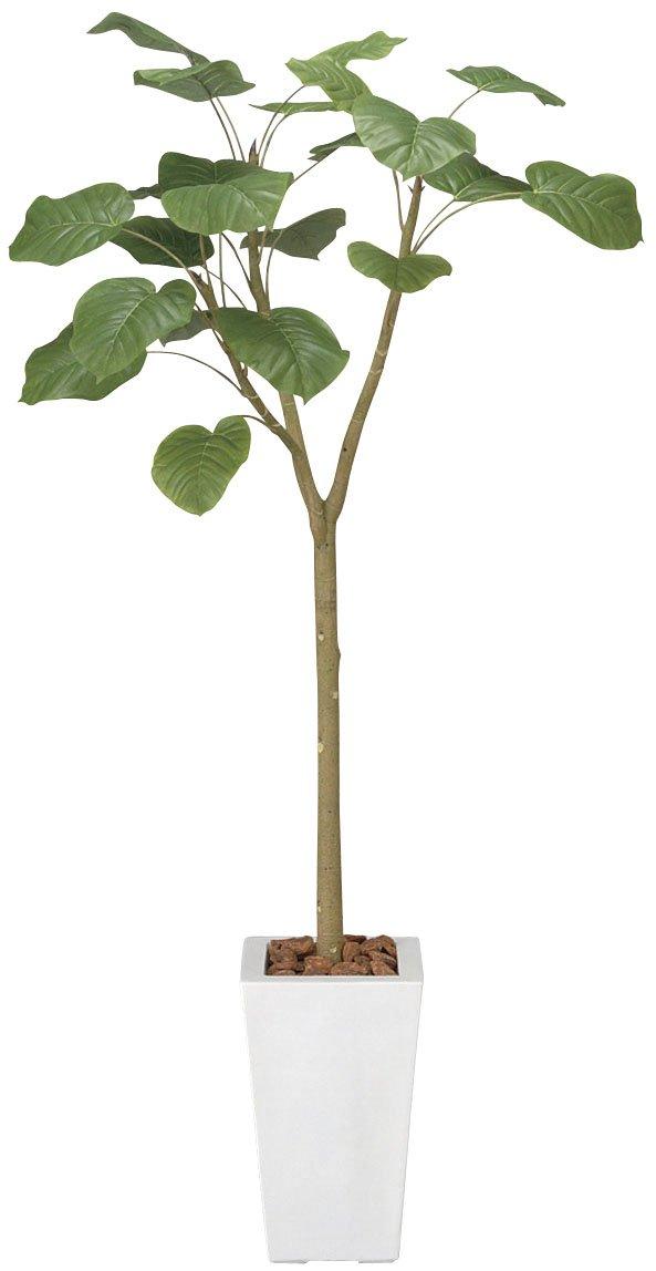 光触媒 ウンベラータ1.7m【人工観葉植物】 B0784P7G4S