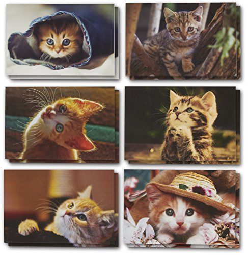(All Occasion Greeting Cards Box Set - 48-Pack Kittens Greeting Cards, 6 Cute Kitten Designs, Envelopes Included, 4 x 6 Inches)