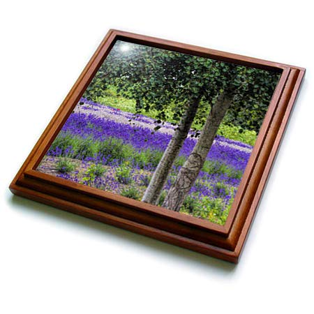 3dRose Danita Delimont - Scenics - USA, Washington State, Sequim,Lavender Field in full boom with trees - 8x8 Trivet with 6x6 ceramic tile (trv_315206_1)