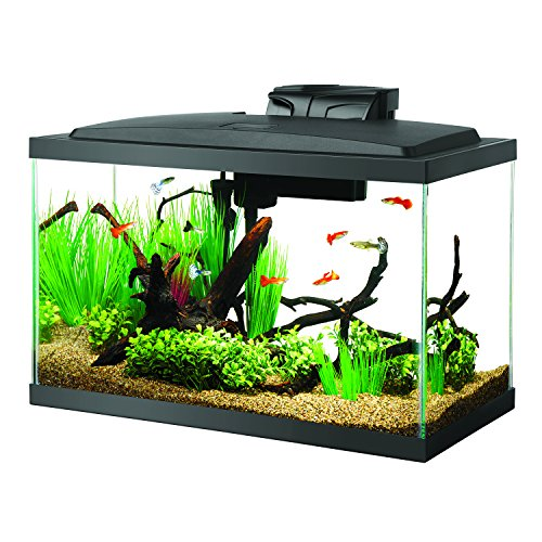 Aqueon Fish Aquarium Starter Kit LED, 10 gallon (Goldfish Kit)