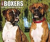 Just Boxers 2020 Box Calendar (Dog Breed Calendar)