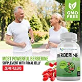 Berberine Plus 1200mg Per Serving - 120 Veggie