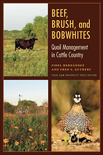 (Beef, Brush, and Bobwhites: Quail Management in Cattle Country (Perspectives on South Texas, sponsored by Texas A&M)