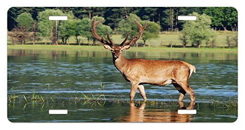 zaeshe3536658 Deer License Plate, Cute Mountain Deer in the Water with a Forest Background Male Mammal Freedom Habitat, High Gloss Aluminum Novelty Plate, 6 X 12 Inches, Green Brown by zaeshe3536658