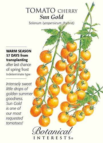 Sun Gold Cherry Tomato - 10 Seeds - Very ()