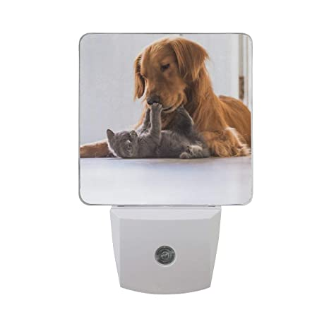 Golden Retriever Dog and British Shorthair Cat Auto Sensor LED Dusk