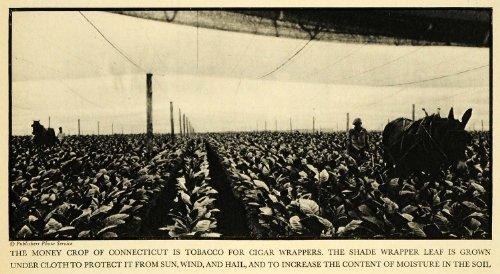 1931 Print Donkey Cigar Tobacco Farming Soil Farmer Agriculture Cigarette Smoke - Original Halftone Print (Wrapper Tobacco)