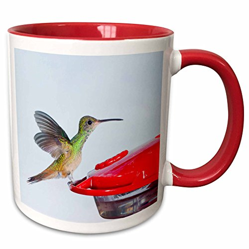 3dRose Danita Delimont - Birds - Buff-bellied Hummingbird landing at feeder - US44 LDI0811 - Larry Ditto - 15oz Two-Tone Red Mug (mug_146936_10) (15 Ounce Hummingbird Feeder)