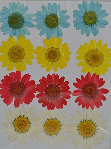 Lovediylife Yellow Brown Daisy Real Pressed Dried Flowers Arts Crafts Sewing Paper Paper Crafts She also remarks of a question box she had when she was. property excellence