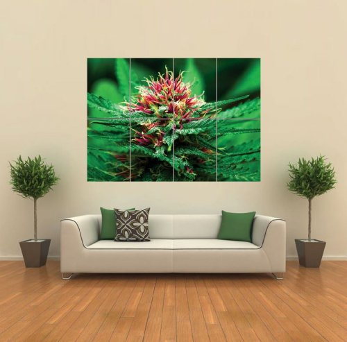 Marijuana Flower Giant Wall Art Print Poster