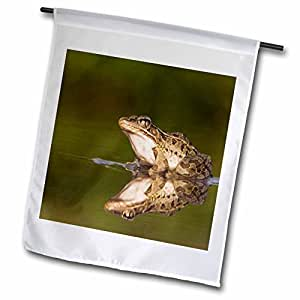 Danita Delimont - Frogs - Rio Grande Leopard Frog, Hill Country, Texas - NA02 RNU0242 - Rolf Nussbaumer - 18 x 27 inch Garden Flag (fl_84337_2)