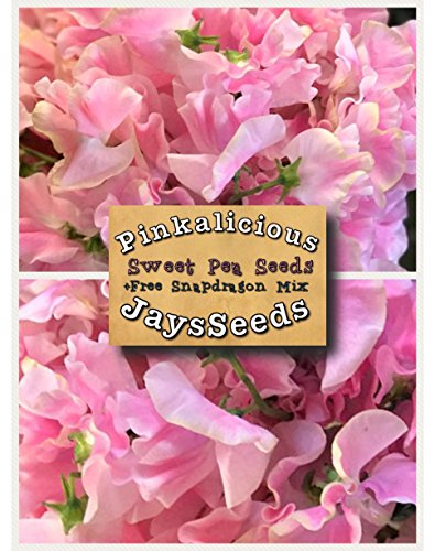 Pinkalicious Sweet Pea 35 Seed UPC 600188190205 + Free Pack Mixed Snapdragons