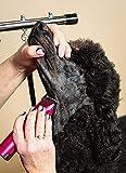 Wahl Professional Animal ARCO Cordless Pet Dog Cat