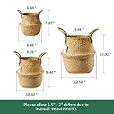 POTEY 730101 Seagrass Plant Basket Set of 3 - Hand