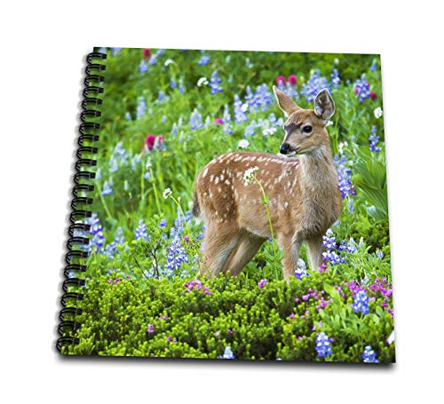 (3dRose Danita Delimont - Deer - Black-tail Deer Fawn, Cascade Wildflowers - Mini Notepad 4 x 4 inch (db_315167_3))