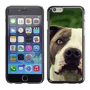TopCaseStore / la caja del caucho duro de la cubierta de protección de la piel - Pitbull Friendly Black White Muzzle Dog - Apple iPhone 6 Plus 5.5