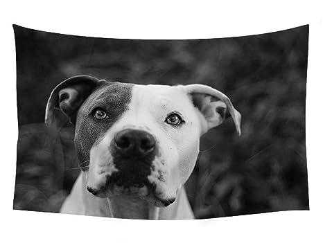 Pitbull perro diseño de animales de animales – tapiz Tapiz Arte De Pared Para Decoración Del