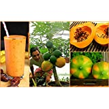 """SEEDS - Dwarf """"Coorg Honey Dew"""" Papaya Easy Grow indoor/outdoor in a pot. SHIPS FROM CANADA!"""