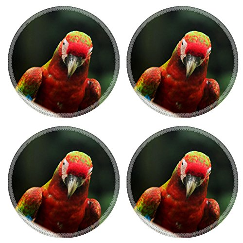 Liili Natural Rubber Round Coasters Image ID 34097160 parrot bird sitting on the perch (Xotic Colours)