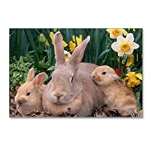 Postcards (8 Pack) Spring Easter Bunny Rabbits