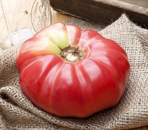German Queen Heirloom Tomato Premium Seed Packet + More (Queen Tomato)