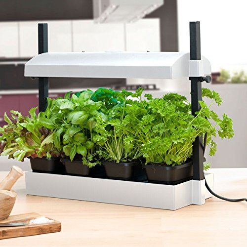 Grow Light Garden And Tray