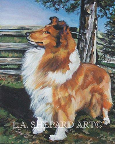 A Rough Collie art portrait print of an LA Shepard painting 11x14