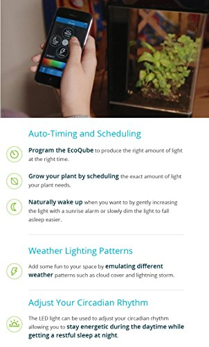 EcoQube Air - Decorative Hydroponics Indoor Herb Home Garden Kit with LED Grow Light, Basil Seeds and True Hepa-Type Filter Air Purifier