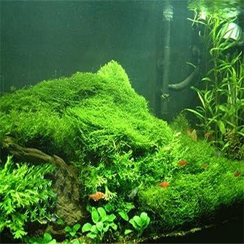 Bonsai semillas de la hierba acuario 100 piezas multicolores semillas de la hierba novela de Plantas para jardín de DIY: Amazon.es: Jardín