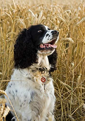 Home Comforts Laminated Poster English Springer Spaniel Dog Springer Spaniel Vivid Imagery Poster Print 24 x 36