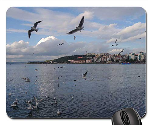 Mouse Pad - Body of Water Birds Marine Nature Sky Beach Blue