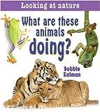 What Are These Animals Doing?, Bobbie Kalman, 0778733440
