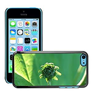 Hot Style Cell Phone PC Hard Case Cover // M00310157 Bud Flora Nature Plant Spring // Apple iPhone 5C