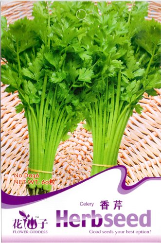 Celery Seed 60 Herb Seeds Chinese Delicious Natural Healthy Vegetables HOT D036 By Mikedaoer