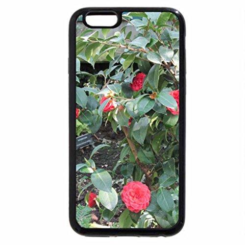 iPhone 6S / iPhone 6 Case (Black) Garden Festival 04 Camellia