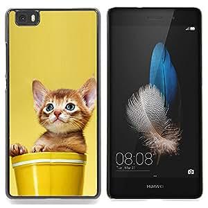 """Qstar Arte & diseño plástico duro Fundas Cover Cubre Hard Case Cover para Huawei Ascend P8 Lite (Not for Normal P8) (Gatito lindo gato en un crisol"""")"""