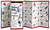 Sibley's Backyard Birds of the Upper Midwest, David Allen Sibley, 1935380648