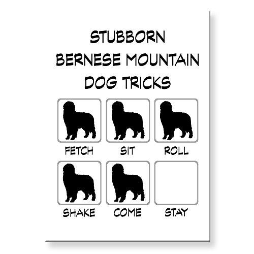 Bernese Mountain Dog Stubborn Tricks Fridge Magnet (Magnet Berner)