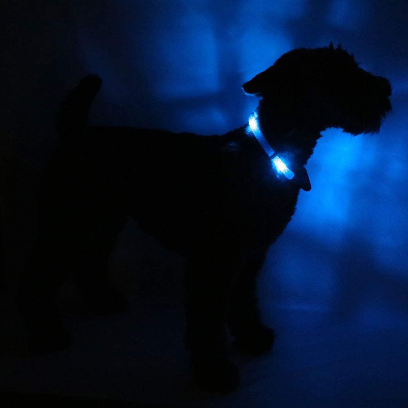 Leuchtie Leuchthalsband Plus Blau Größe 50 I Led Halsband Für Hunde I 100 H Leuchtdauer I Wasserdicht I Enorm Hell Haustier
